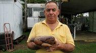 Cane Toads: The Conquest - Trailer
