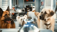 Cats and Dogs: The Revenge of Kitty Galore - Trailer